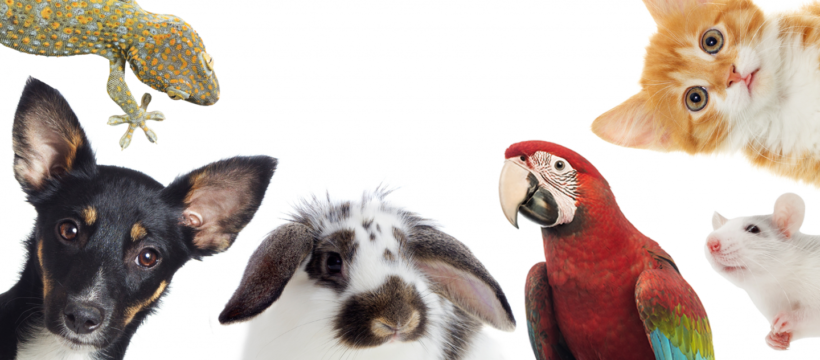 How to Get the Right Pet Health Insurance Policy?