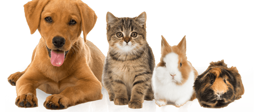 Is Pet Insurance A Waste Of Money Or A Good Idea?